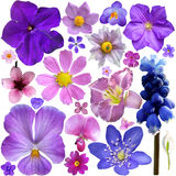 Sammlung blaue, purpurrote Blumen Stockfotos