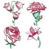 Sammlung Blumen Stockbild