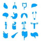 Sammlung der menschlichen Organe stock abbildung