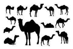 Sammlung der Schattenbildkamelsäugetier-Vektorillustration, arabischer Tierlogovektor lizenzfreie abbildung