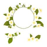 Sammlung der weißen Blumen mit Kranz, Laub Lizenzfreie Stockfotografie