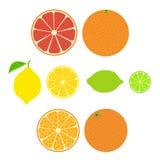 Sammlung der Zitrusfrucht Scheiben der Orange, der Zitrone, des Kalkes und der Pampelmuse Lizenzfreie Stockbilder