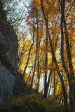 Sammlung des Herbstwaldes Stockfotos