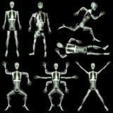 Sammlung des menschlichen Skeletts Lizenzfreies Stockbild