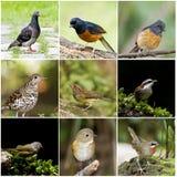Sammlung des Vogels Stockbild
