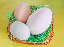 Sammlung Eier, großes weißes Gänseei, hellgrünes Entenei, Lizenzfreie Stockfotos