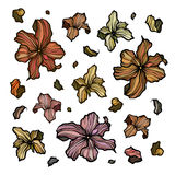 Sammlung Entwurfszusammenfassungsblumen Vektor Abbildung