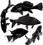 Sammlung Fische Stockbild