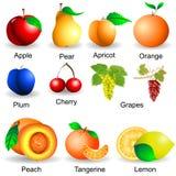 Sammlung Früchte Lizenzfreies Stockfoto
