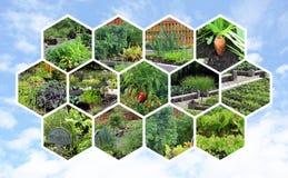 Sammlung Gemüsegärten stockbilder