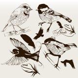 Sammlung gezeichnete Vögel des Vektors Hand für Entwurf Stockbild