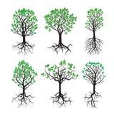 Sammlung grüner Baum und Wurzeln Lizenzfreies Stockbild