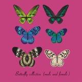 Sammlung mit buntem Schmetterling Stockfotos