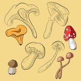 Sammlung mit Pilzen und Stromkreisen von Pilzen Stockfotografie