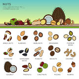 Sammlung Nüsse auf dem Tisch Stockfotos