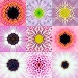 Sammlung neun des rosa konzentrischen Blumen-Mandala-Kaleidoskops stockfotos
