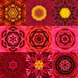 Sammlung neun des roten konzentrischen Blumen-Mandala-Kaleidoskops lizenzfreie stockfotos