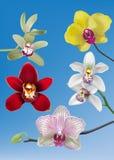 Sammlung Orchideen-Vektoren Lizenzfreies Stockfoto