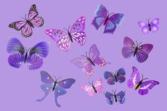 Sammlung purpurrote Fantasie-Schmetterlinge Stockfoto