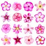 Sammlung rosa Blumen lokalisiert auf weißem Hintergrund Stockfotos