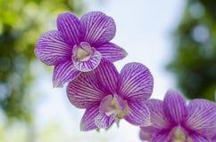 Sammlung rosa Orchideen Stockbild