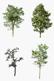 Sammlung schöne grüne Bäume lokalisiert Stockfoto