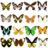 Sammlung schöne tropische Schmetterlinge Stockfotos