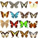 Sammlung schöne tropische Schmetterlinge Lizenzfreie Stockfotografie