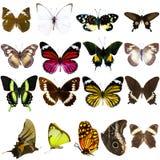 Sammlung schöne tropische Schmetterlinge Lizenzfreies Stockfoto