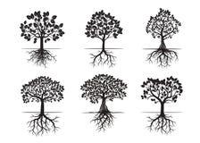Sammlung schwarze Bäume und Wurzeln Auch im corel abgehobenen Betrag Lizenzfreie Stockbilder