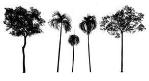 Sammlung schwarze Baumschattenbilder auf weißem Hintergrund, silho Lizenzfreies Stockfoto