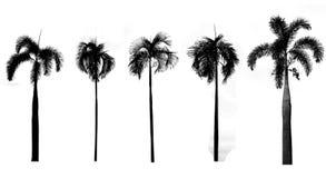 Sammlung schwarze Baumschattenbilder auf weißem Hintergrund, silho Lizenzfreie Stockfotografie