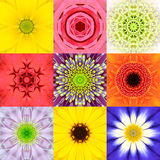 Sammlung stellte neun Blumen-Mandala-das verschiedene Farbkaleidoskop ein Lizenzfreies Stockbild