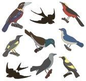 Sammlung Vektorbilder von amerikanischen Vögeln Lizenzfreies Stockbild