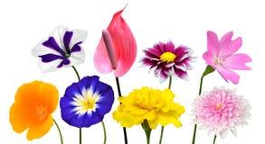 Sammlung verschiedene bunte Blumen lokalisiert auf Weiß Stockbild