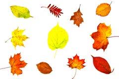 Sammlung verschiedener Herbstlaub Stockbild
