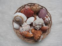 Sammlung verschiedenes Seetiere urcihn, Schnecke, Sanddollar, Oberteil, Krabbe auf Weiß stockbilder