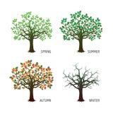 Sammlung Vierjahreszeitenbäume Auch im corel abgehobenen Betrag Stockbild