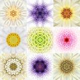 Sammlung von neun weißen konzentrischen Blumen-Mandalen konzentrisch stockfotografie