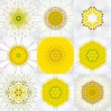 Sammlung von neun weißen konzentrischen Blumen-Mandalen konzentrisch lizenzfreies stockbild