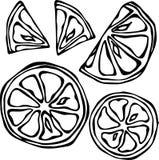 Sammlung Zitronen, lokalisiert auf weißem Hintergrund, Gekritzel-Art-Vektor-Illustration Stockbilder