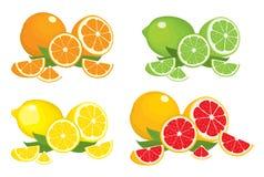 Sammlung Zitrusfruchtprodukte - Orange, Zitrone, Kalk und Pampelmuse mit den Blättern, lokalisiert auf weißem Hintergrund vektor abbildung