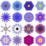 Sammlungs-verschiedene blaue konzentrische Blumen lokalisiert auf Weiß Lizenzfreie Stockfotos