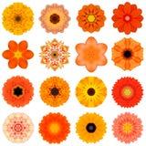 Sammlungs-verschiedene orange konzentrische Blumen lokalisiert auf Weiß Stockbilder