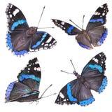 Sammlungsaquarell von Fliegenschmetterlingen Lizenzfreies Stockbild