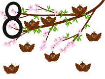 Sammlungszahl für Kindertiervögel - die Nr. acht, Spatzen Stockbild
