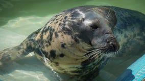 Sammy Seal... Royalty Free Stock Image