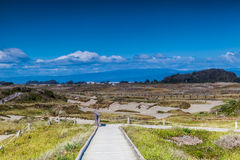 Samoa Dunes in Eureka California Royalty Free Stock Images