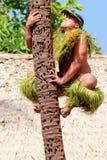 A Samoan man demonstrates how to climb a coconut tree. Honolulu, Hawaii - May 27, 2016:A Samoan man demonstrates how to climb a coconut tree at the Polynesian royalty free stock photos