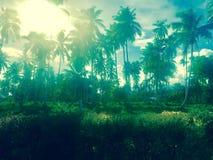 Samoansk djungel royaltyfria foton